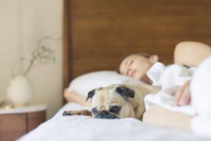 Barn der sover med hunden